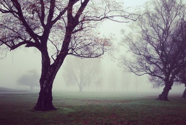 trees-336682_640